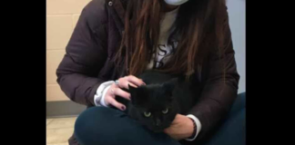 cat-missing-from-new-jersey-for-four-years-found-at-pittsburgh,-reunited-with-family
